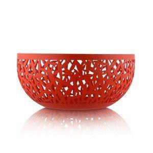 Misa na owoce Cactus! czerwona