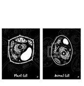 Plakat Animal Cell i Plant Cell w zestawie 2 szt. - zdjęcie 1