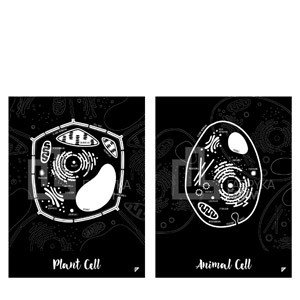 Plakat Animal Cell i Plant Cell w zestawie 2 szt.