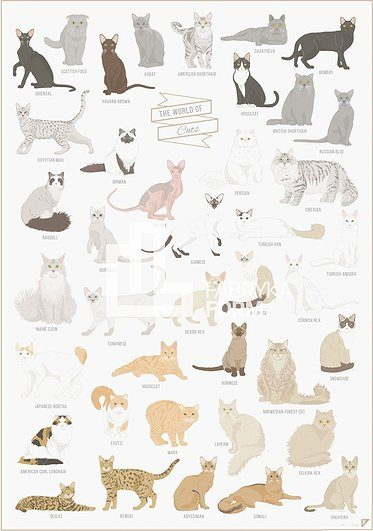 Plakat The World of Cats
