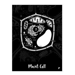 Plakat Plant Cell