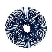 Patera Anemone welwetowy błękit