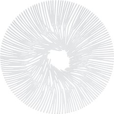 Patera Anemone biała